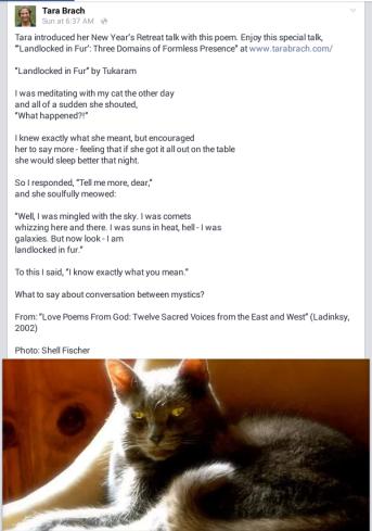 Tara Brach Facebook page